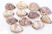 Lot 35 - Rare set of ten Victorian Carsved cowrie...