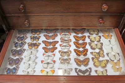 Lot 844-Collection of butterflies in cabinet and various others