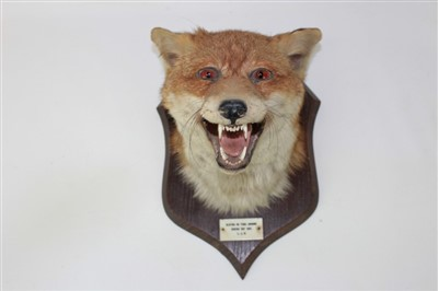 Lot 850-Fox mask mounted on wooden shield with plaque - Clifton on Teme Hounds Boxing Day 1957. L.J.B