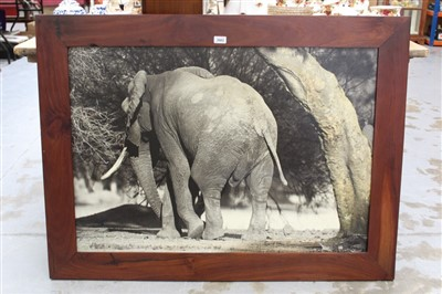 Lot 9-Hugo Fircks signed black and white photographic print on canvas - An Elephant, signed and dated '03, in hardwood frame