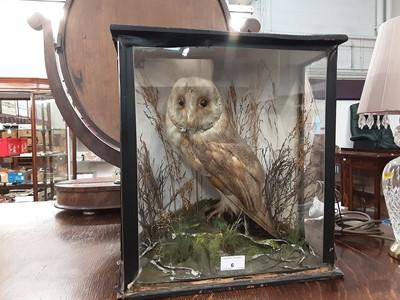 Lot 6-Stuffed owl in glazed case