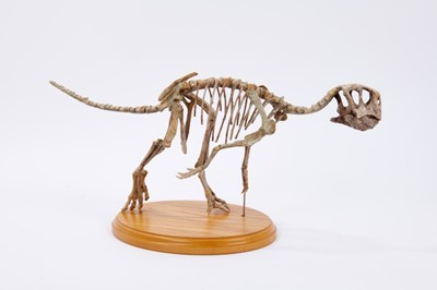 Lot 373 - Very scarce and fine example of a juvenile Psittacosaurus ('parrot lizard') dinosaur