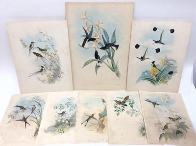 Lot 116 - Gould & Richter, eight lithographs of Hummingbirds