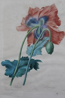 Lot 63 - After Redoute by Langlois, two hand coloured engravings circa 1820s and one other