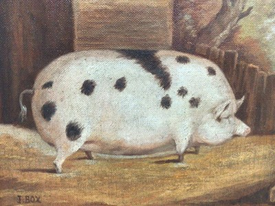 Lot 141 - J. Box, oil on canvas laid on board - A Black Spot Prize Pig in a Sty, signed, 20cm x 25cm, framed