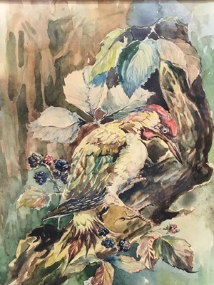 Lot 165 - Basil Ede (1931-2016) watercolour - a green woodpecker, signed, 28cm x 21cm, in glazed gilt frame   NB: this is likely an early left handed work shortly after his stroke in 1989