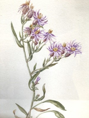Lot 24 - Group of five mid 19th century botanical watercolours to include 'Common Saintfoin'