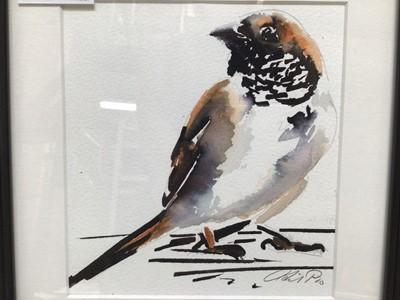 Lot 16 - English School, contemporary, watercolour - A Sparrow, indistinctly signed, 15cm x 14cm, in glazed frame