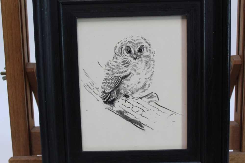 Lot 1706 - Eileen Soper (1905-1990) pencil and charcoal - Rescued Owl, in glazed frame, 14.5cm x 11.5cm  Provenance: Chris Beetles Ltd. London