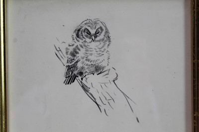 Lot 1705 - Eileen Soper (1905-1990) pencil drawing - Napping Owl, in glazed gilt frame  Provenance: Chris Beetles Gallery, London