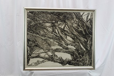 Lot 1819 - Patricia Tobacco Forrester (1940-2011) signed artist's proof etching - The Ekman Tree, circa 1970, in glazed frame  Provenance:  Chris Beetles Ltd, London