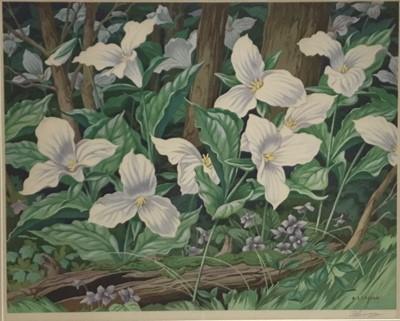 Lot 64 - Albert Joseph Casson (1898-1992), colour print - White Trillium, signed