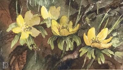 Lot 20 - Evangeline Dickson (1922-1992) watercolour - flowers, together with another watercolour of flowers